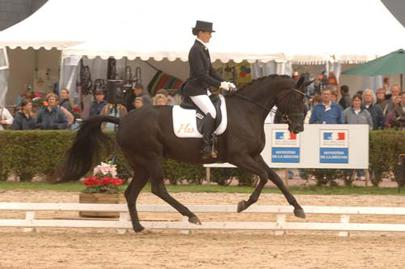 GS7-saumur-michel-noble dream largeL