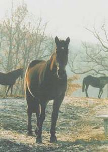 cheval-hiver B largeP