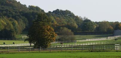 Haras courses Normandie largeL