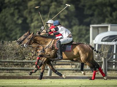 polo chantilly largeL