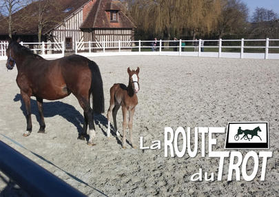 route du trot largeL