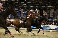 salon 2014 horse ball chambly montpellier mediumL