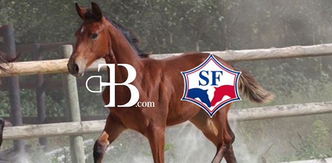 Vente The Best Horses x stud-book Selle Français